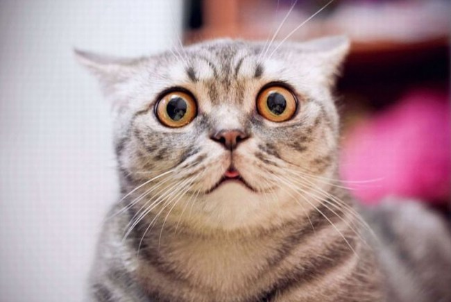 macska kaparófa
